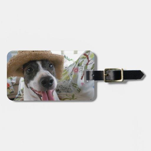 Jack Russell Terrier Etiqueta De Equipaje