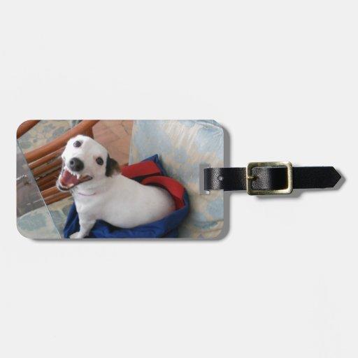 Jack Russell Terrier Etiquetas Para Equipaje