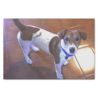 "jack russell terrier full 2.png 10"" x 15"" tissue paper"