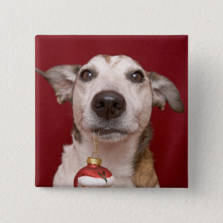 Jack Russell Terrier Holding Christmas Ornament Button