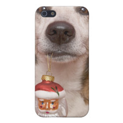 Case Savvy iPhone 5 Matte Finish Case with Jack Russell Terrier Phone Cases design