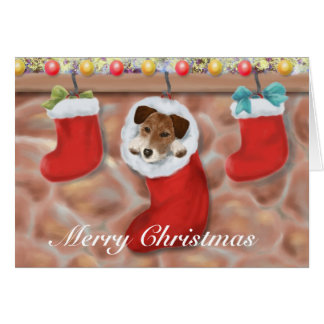 Jack Russell Terrier in a stocking Card