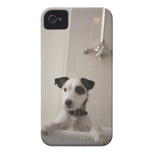 Jack russell terrier. iPhone 4 cases