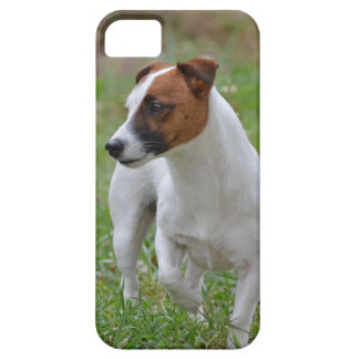 Jack Russell Terrier iPhone 5 case