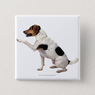 Jack Russell Terrier Lifting Paw Button