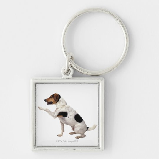 Jack Russell Terrier Lifting Paw Keychain