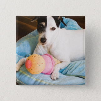 Jack russell terrier lying down button