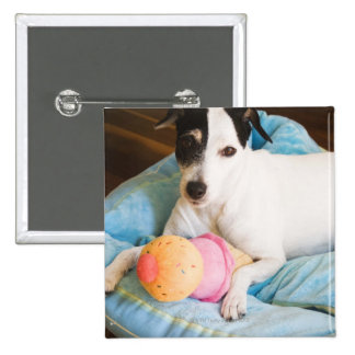 Jack russell terrier lying down 2 inch square button
