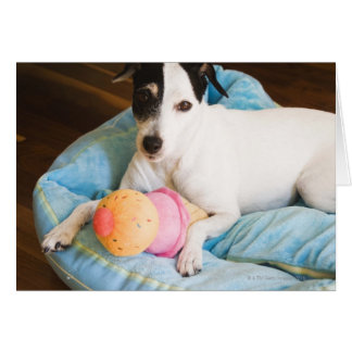 Jack russell terrier lying down card