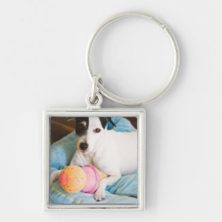 Jack russell terrier lying down Silver-Colored square keychain