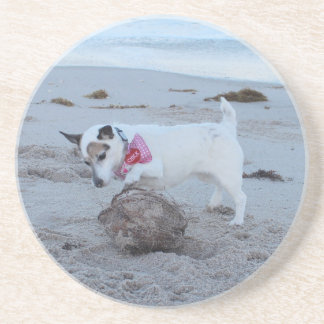 Jack Russell Terrier On The Beach Coaster