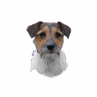Jack Russell Terrier Photo Cutout