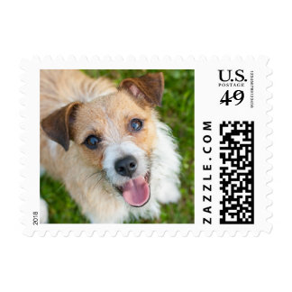 Jack Russell terrier photo postage stamp