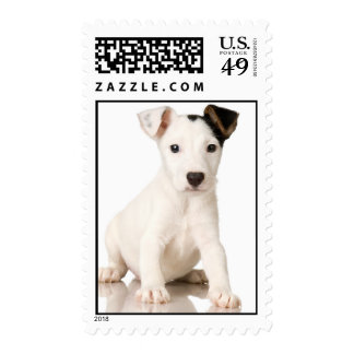Jack Russell Terrier Photograph Postage Stamp