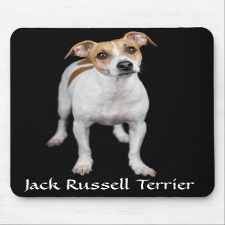 Jack Russell Terrier Portrait Mousepad