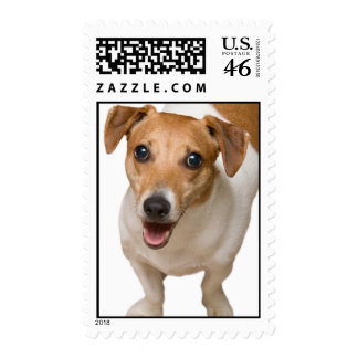 Jack Russell Terrier Postage Stamps