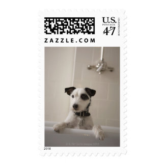 Jack russell terrier. postage