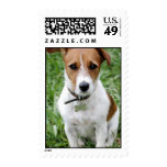Jack Russell Terrier Postage Stamp