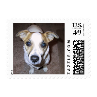 Jack Russell Terrier Postage Stamp.
