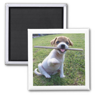 Jack Russell Terrier Puppy 2 Inch Square Magnet