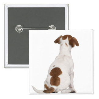Jack Russell Terrier puppy (3 months old) 2 Inch Square Button