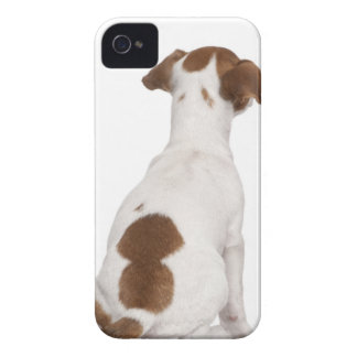 Jack Russell Terrier puppy (3 months old) iPhone 4 Cover