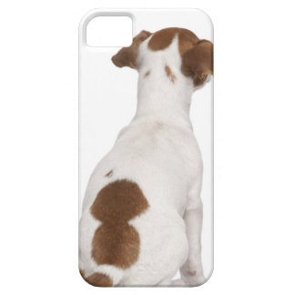 Jack Russell Terrier puppy (3 months old) iPhone 5 Cases