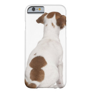 Jack Russell Terrier puppy (3 months old) Barely There iPhone 6 Case