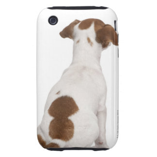 Jack Russell Terrier puppy (3 months old) Tough iPhone 3 Cover