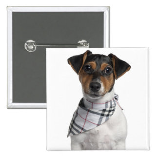 Jack Russell Terrier puppy (4 months old) 2 Inch Square Button