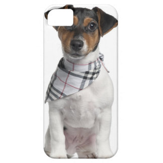 Jack Russell Terrier puppy (4 months old) iPhone SE/5/5s Case