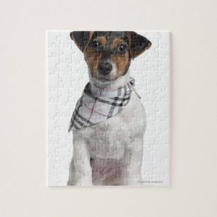 Jack Russell Puppy Jigsaw Puzzles | Zazzle