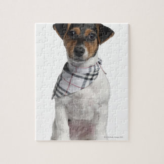 Jack Russell Terrier puppy (4 months old) Jigsaw Puzzles