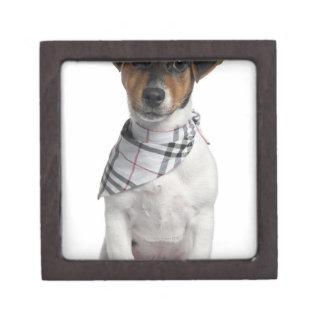 Jack Russell Terrier puppy (4 months old) Keepsake Box
