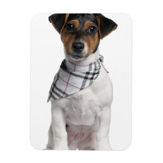 Jack Russell Terrier puppy (4 months old) Rectangular Photo Magnet