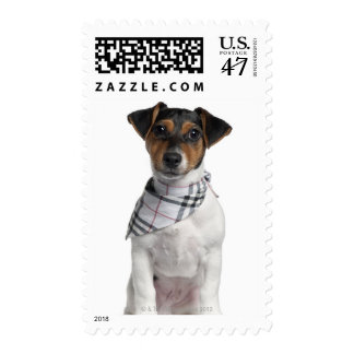 Jack Russell Terrier puppy (4 months old) Stamp