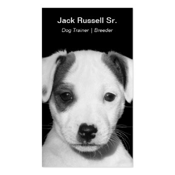 Jack Russell Terrier Puppy Business Card
