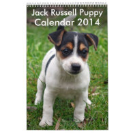 Jack Russell Terrier Puppy Calendar 2014