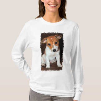 Jack Russell Terrier Puppy Dog  Hoody