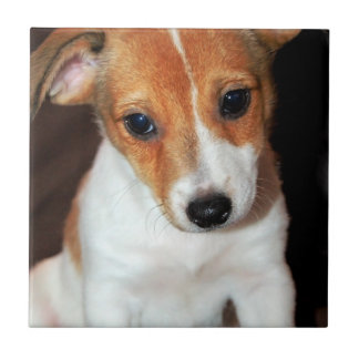 Jack Russell Terrier Puppy Dog Tile