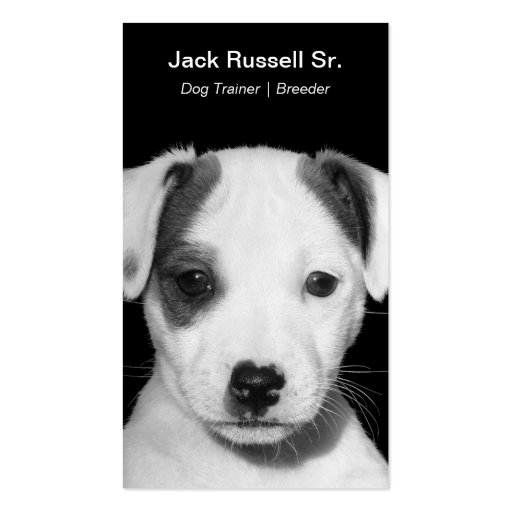 Jack Russell Terrier Puppy Double-Sided Standard Business Cards (Pack Of 100)