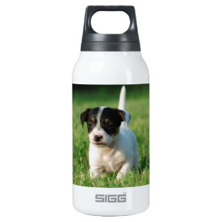 Jack Russell Terrier puppy Insulated Water Bottle