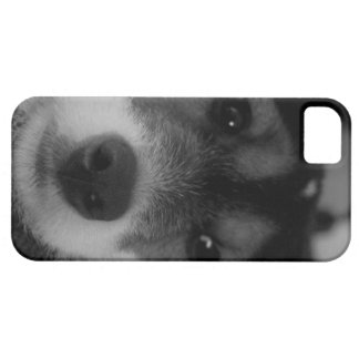 Jack Russell Terrier Puppy iPhone Case