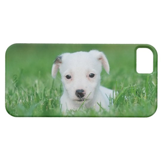 Jack Russell Terrier puppy iPhone SE/5/5s Case