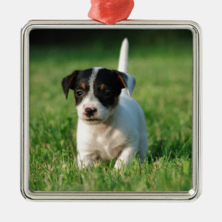 Jack Russell Terrier puppy Christmas Ornaments