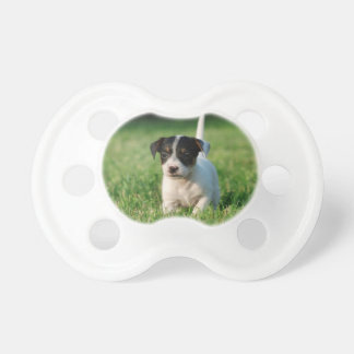 Jack Russell Terrier puppy Pacifier
