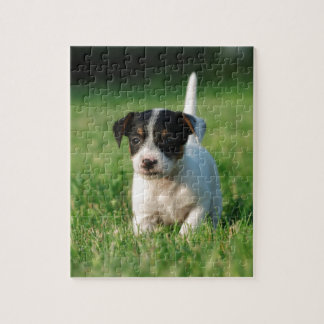 Jack Russell Terrier puppy Jigsaw Puzzles