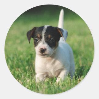 Jack Russell Terrier puppy Sticker