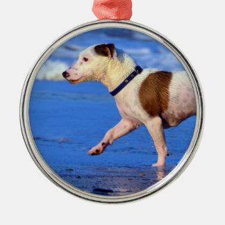 Jack Russell Terrier que corre en la playa Adorno Navideño Redondo De Metal