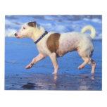 Jack Russell Terrier que corre en la playa Libretas Para Notas